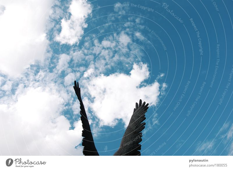 wing system Angel Wing Sky Heaven Clouds Blue White Weather Bronze Bird Flying Freedom Summer Hover Hope Feather