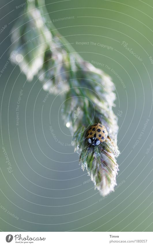 Good morning! Good morning! Colour photo Exterior shot Close-up Copy Space left Morning Dawn Light Blur Nature Plant Animal Grass Wild plant Beetle 1 Cold Wet