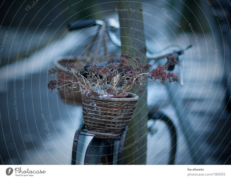 bicycle Colour photo Morning Dawn Twilight Freiburg im Breisgau Germany Outskirts Old town Deserted Transport Pedestrian Bicycle Metal Observe Contentment