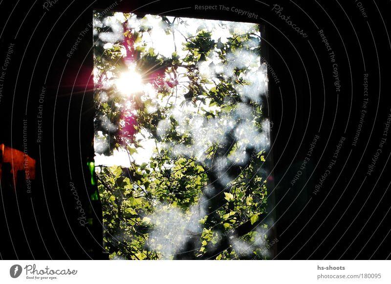 Green Joy Window Happy Think Happiness Observe Infinity Warm-heartedness Blossoming Original Sunlight