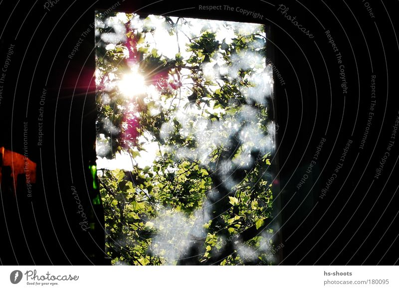 In the morning through the tree against the sun Colour photo Interior shot Deserted Morning Day Window Observe Blossoming Think Happy Infinity Original Green