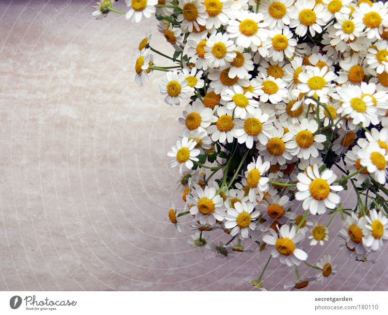 White Beautiful Yellow Wood Gray Blossom Happy Small Healthy Flower Flat (apartment) Fresh Table Living or residing Romance Decoration