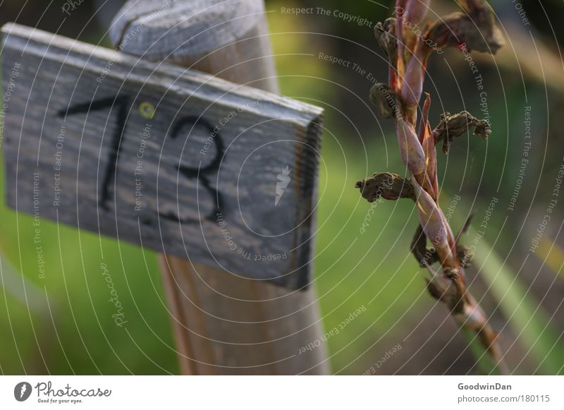13 Autumn Plant Calm Orderliness Digits and numbers Colour photo Exterior shot Day Light Shallow depth of field Wooden sign Limp