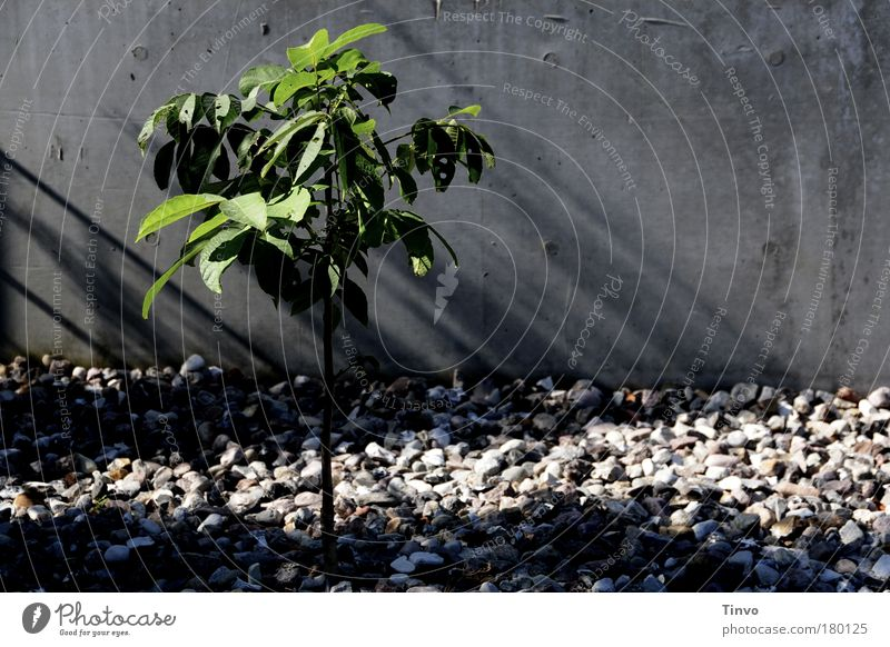 Nature Green Tree Plant Summer Loneliness Autumn Cold Environment Wall (building) Gray Small Sadness Wall (barrier) Power Growth