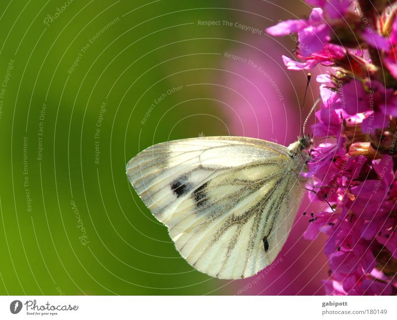 Nature White Flower Green Plant Summer Calm Leaf Animal Life Blossom Landscape Contentment Pink Environment Esthetic