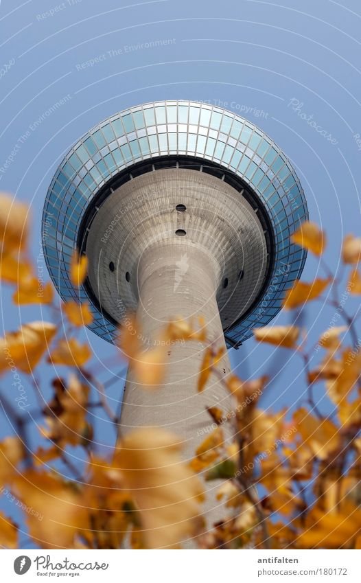 autumn prospects Nature Plant Sky Cloudless sky Autumn Beautiful weather Duesseldorf Germany Tower Rheinturm Tourist Attraction Landmark Tall Blue Brown Yellow