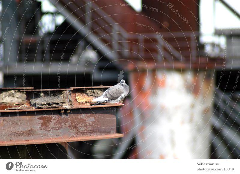 Better a pigeon... Pigeon Furnace Iron Bird Industrial heritage Duisburg landscape park