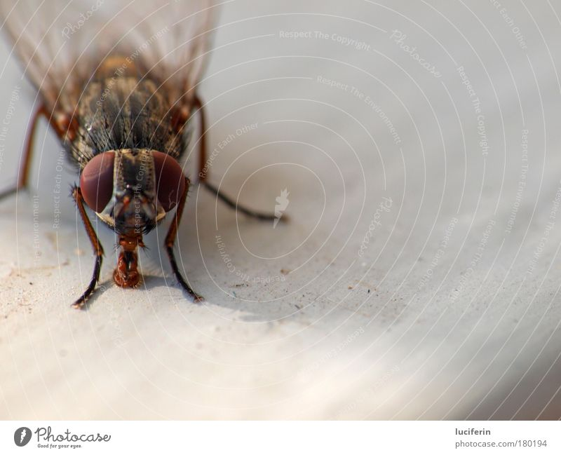 Nature Black Animal Gray Brown Dirty Fly Environment Animal face Appetite Disgust Voracious