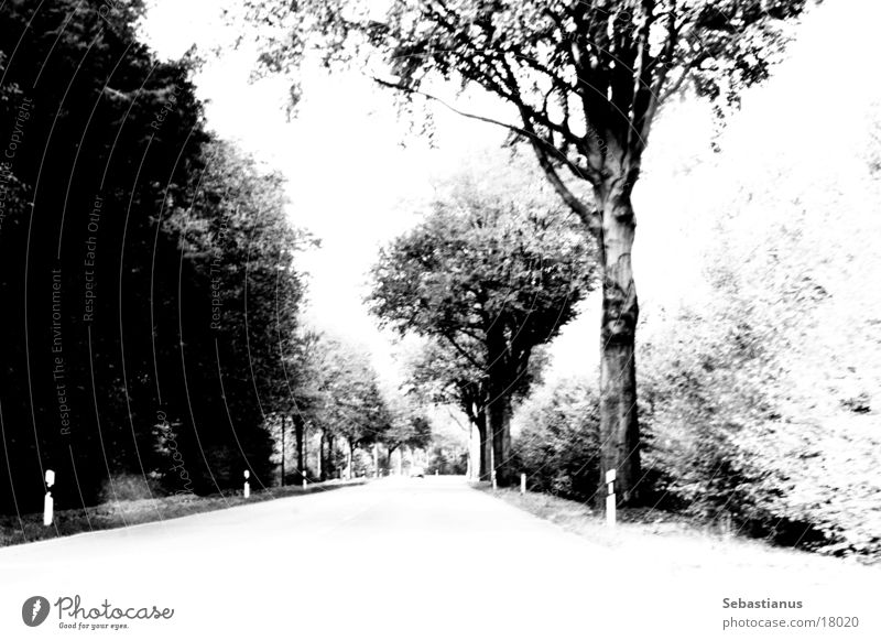 Straight ahead, behind the curve comes color Country road Tree Edge of the forest Niederrhein Black & white photo