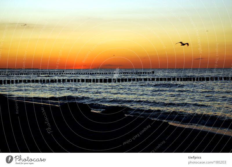 Water Ocean Summer Beach Vacation & Travel Loneliness Sand Moody Orange Waves Coast Pink Romance Bird Sunset Twilight