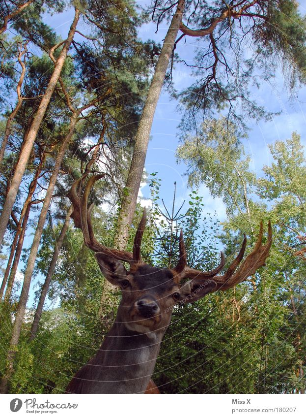 Hunters**** for everyone Exterior shot Close-up Deserted Copy Space top Day Light Worm's-eye view Upper body Looking Hunting Vacation & Travel Tourism Trip