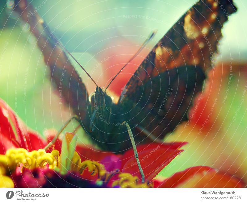 Nature Beautiful Red Flower Black Animal Blossom Flying Butterfly To feed Multicoloured