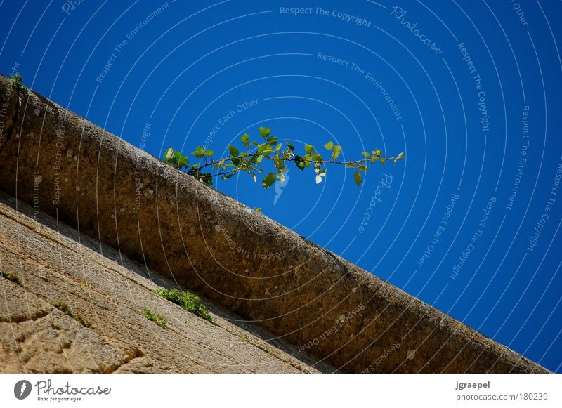 wall plant Colour photo Exterior shot Deserted Copy Space right Copy Space top Day Worm's-eye view Pont du Gard Nature Plant Cloudless sky Beautiful weather