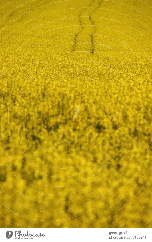 sprit instead of bread Colour photo Exterior shot Deserted Copy Space top Day Light Blur Food Cooking oil Plant Animal Flower Foliage plant Thrifty Canola Field