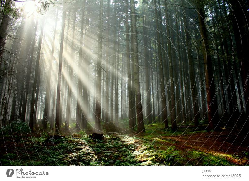 Nature Beautiful Tree Sun Calm Loneliness Forest Relaxation Freedom Autumn Environment Bright Dawn Contentment Sunbeam Fog