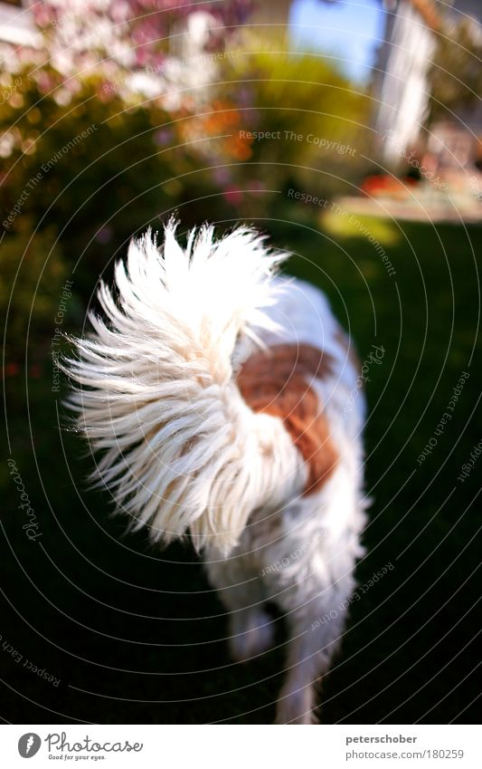 White Red Summer Animal Playing Garden Dog Walking Firm Pelt Curiosity Blossoming Hunting Appetite Terrace Expectation