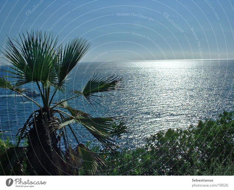 Sun Ocean Garden Waves Spain Palm tree Barcelona