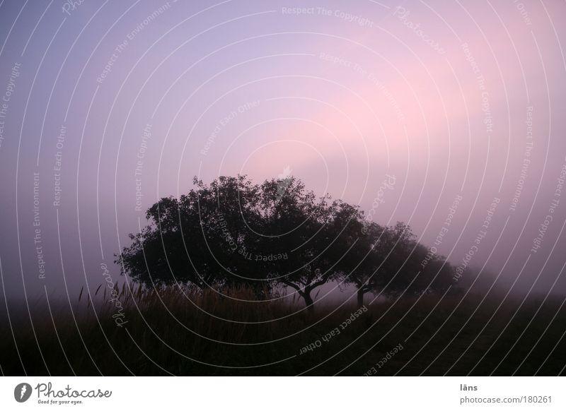 Nature Sky Tree Plant Calm Landscape Moody Field Fog Elements Haze Apple tree