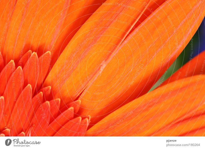 Nature Beautiful Flower Plant Summer Calm Blossom Happy Orange Design Elegant Esthetic Decoration Natural Fragrance Blossom leave