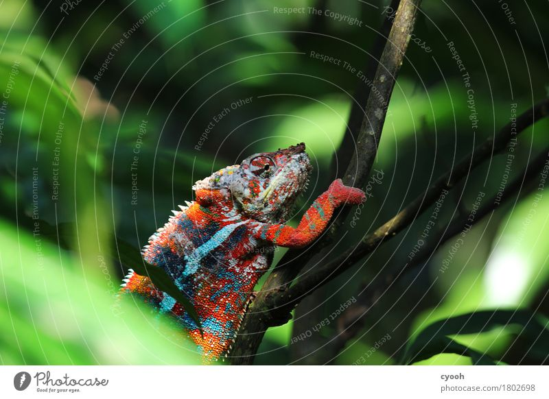 Colour Animal Calm Bushes Success Crazy To enjoy Break Climbing Play of colours Cozy Thorny Hiding place Reptiles Comfortable Camouflage