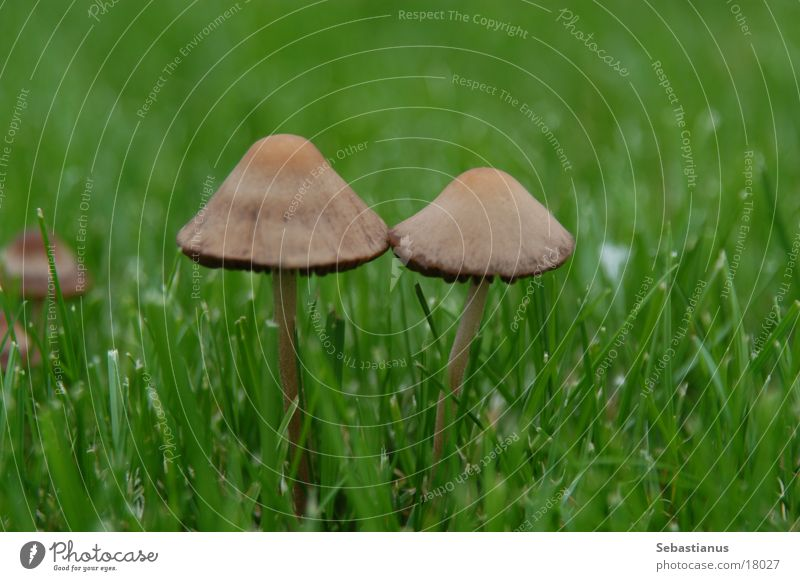 Green Plant Meadow Lawn Hat Mushroom Twin