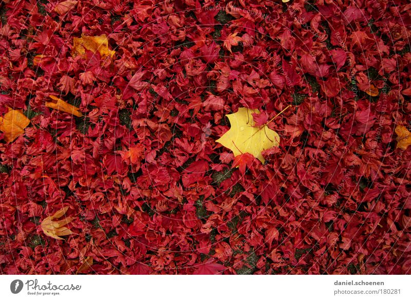 Nature Red Leaf Yellow Autumn Park Change Transience