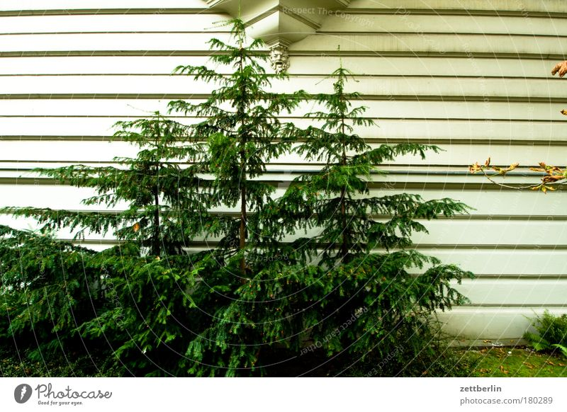Tree House (Residential Structure) Facade Stripe Christmas tree Fir tree Statue Plaster Furrow Copy Space Spruce Town house (City: Block of flats) Coniferous trees Relief Garden Suburb