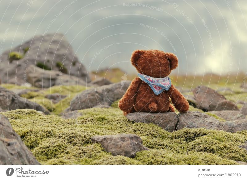 Teddy Per in Iceland (4) Vacation & Travel Adventure Landscape Moss Rock Teddy bear Stone Looking Sit Exceptional Happy Cuddly Small Town