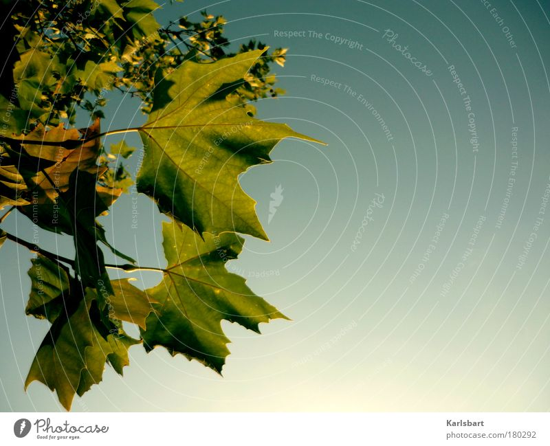 Sky Nature Green Tree Environment Life Autumn Movement Freedom Park Contentment Design Change Hope Idyll Transience