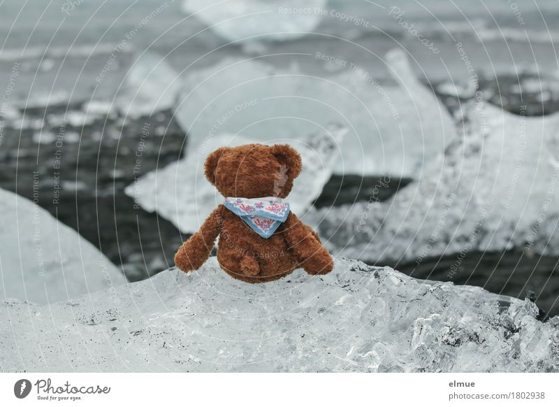 Teddy Per in Iceland (2) Vacation & Travel Adventure Ocean Nature Climate change Glacier Coast ecology parlour glacial lake Glacier ice Toys Teddy bear Discover