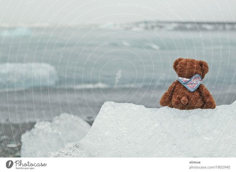 Teddy Per in Iceland (1) Vacation & Travel Water Climate change Gale Frost Coast ecology parlour glacial lake Glacier ice Glacial melt Toys Teddy bear Discover