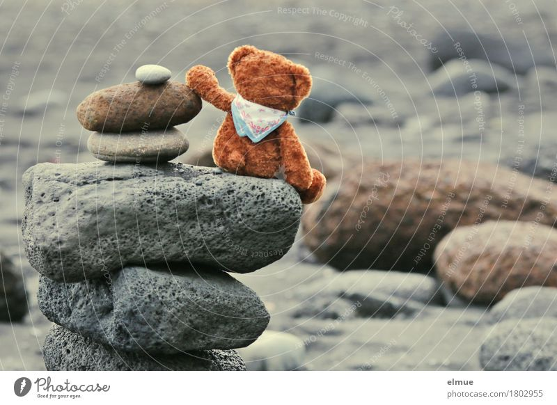 Teddy Per in Iceland (3) Playing Vacation & Travel Beach Nature Coast Teddy bear Stone Cairn Troll Looking Sit Together Happy Small Joy Contentment Romance Calm