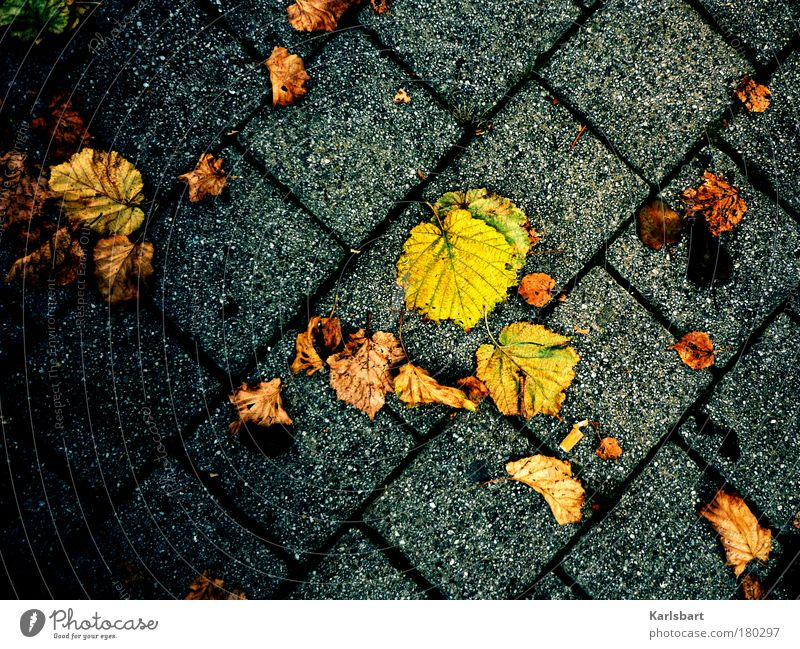 Nature Leaf Relaxation Environment Street Life Autumn Lanes & trails Stone Park Line Design Change Transience Decline Traffic infrastructure