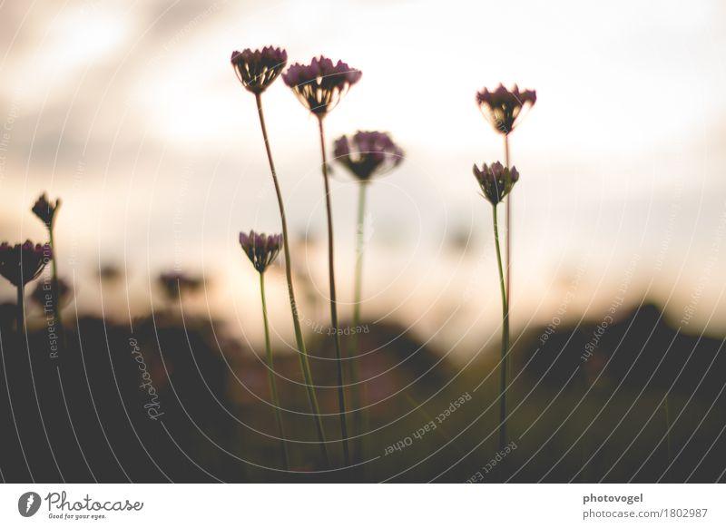 soft light, delicate flowers Environment Nature Plant Autumn Blossom Friendliness Brown Emotions Happy Contentment Joie de vivre (Vitality) Beautiful Peaceful