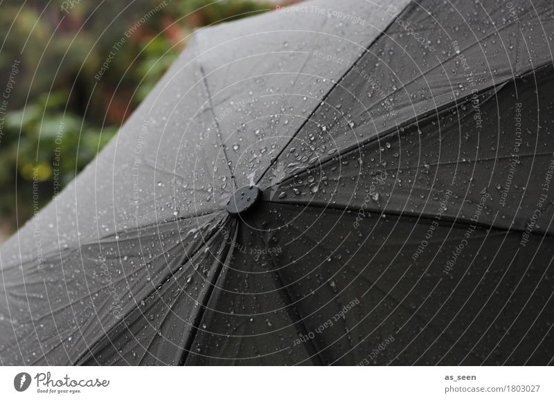 autumn weather Hallowe'en Funeral service Environment Nature Water Drops of water Autumn Climate Climate change Weather Bad weather Storm Rain Glittering