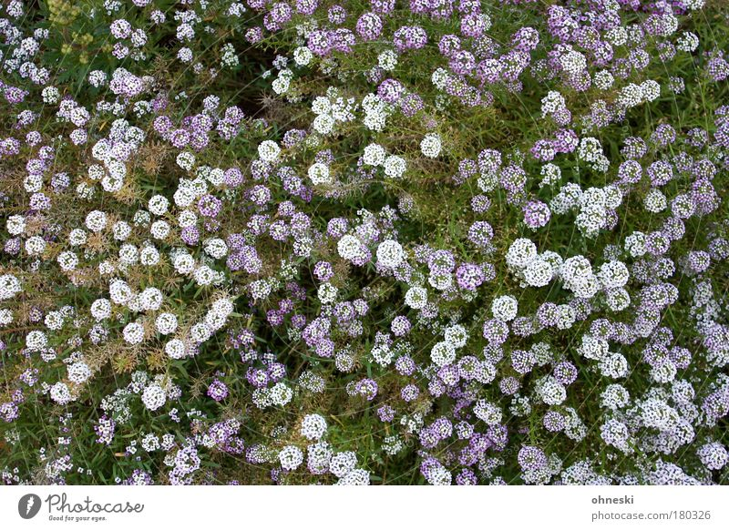 Nature White Flower Green Plant Life Meadow Blossom Earth Violet Bird's-eye view Blossoming Spring fever