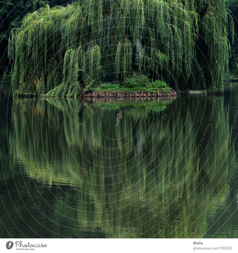 Mirror, mirror Environment Nature Landscape Plant Water Summer Tree Willow tree Weeping willow Park Lakeside Pond Growth Natural Green Moody Romance Calm