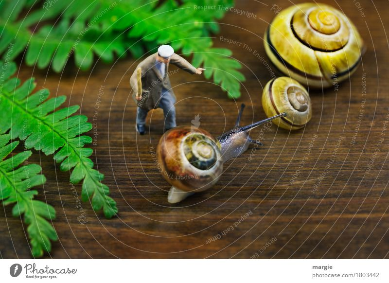 Miniwelten - Go to the others immediately! Human being Masculine Man Adults 1 Leaf Animal Wild animal Snail 3 Brown Yellow Green Snail shell Spiral Feeler Stick