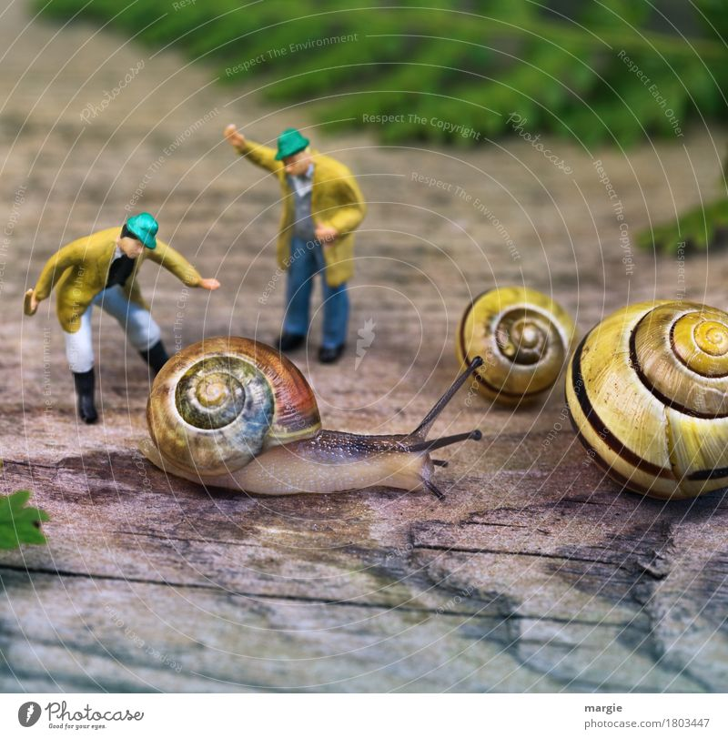 Miniwelten - Will you probably... Human being Masculine Man Adults 2 Animal Wild animal Snail 3 Scream Yellow Green Snail shell Snail slime Spiral Beat Feeler