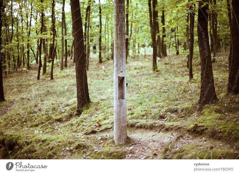 Nature Tree Calm Forest Life Dream Sadness Landscape Design Environment Concrete Modern Esthetic Network Future Communicate