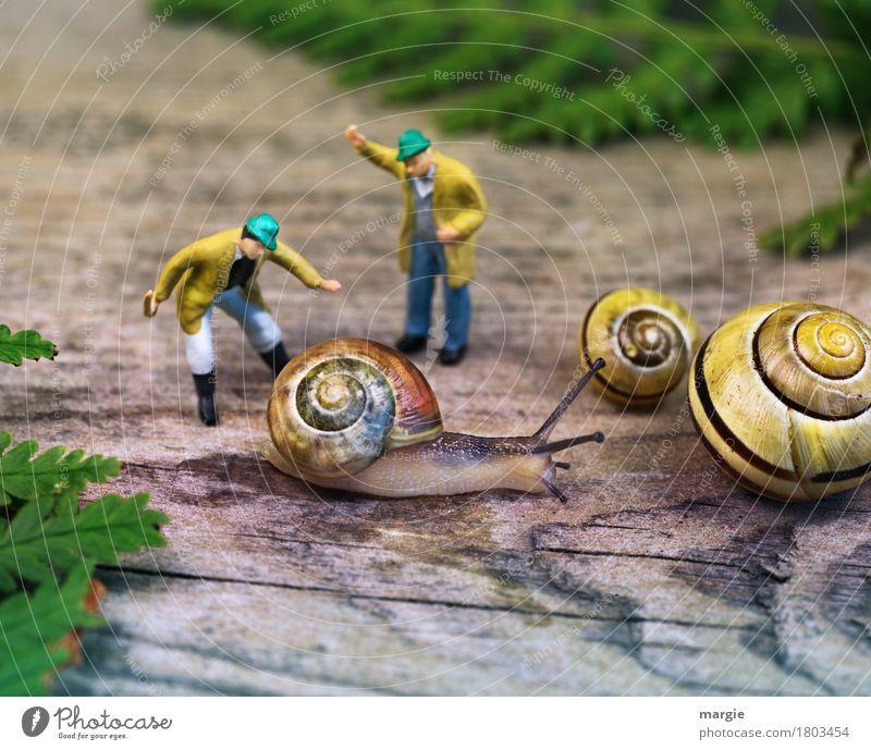 Miniwelten - Snail breeding Human being Masculine Man Adults 2 Plant Leaf Animal Pet 3 Hunting Scream Yellow Green Fern Spiral Figure Square Snail shell Crumpet