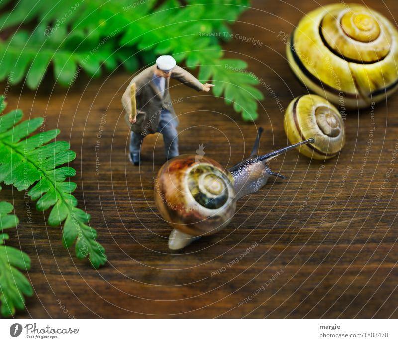 Human being Man Green Animal Adults Yellow Brown Masculine Wild animal Snail Farm animal