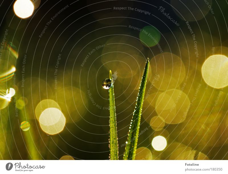 morning dew Colour photo Multicoloured Exterior shot Morning Day Light Reflection Sunlight Sunbeam Environment Nature Landscape Plant Water Drops of water