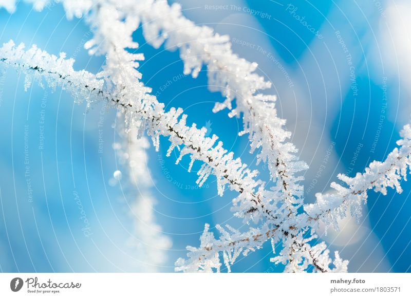 winter magic Winter Ice Frost Glittering Exceptional Bright Cold Blue White Bizarre Transience Ice crystal Background picture Natural phenomenon Hoar frost