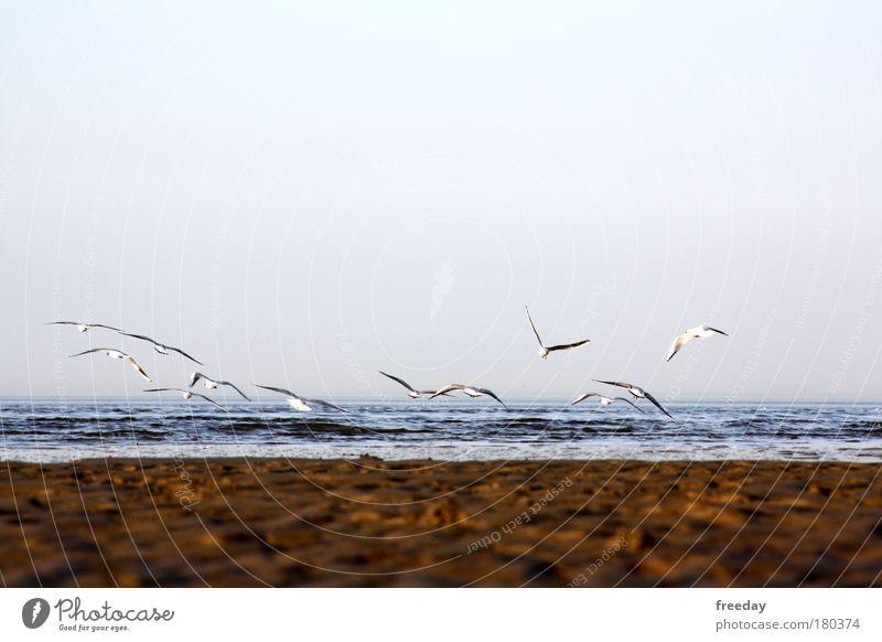 Water Ocean Plant Beach Animal Far-off places Freedom Air Bird Coast Fog Wind Island Group of animals Climate Longing