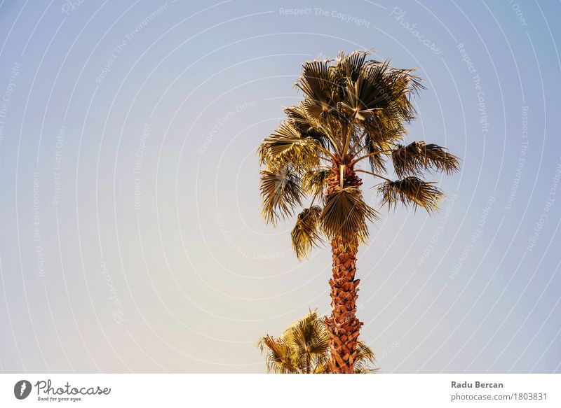 Green Palm Trees On Clear Blue Sky Exotic Vacation & Travel Tourism Summer Sun Beach Island Environment Nature Landscape Plant Leaf Desert Hot Natural Retro