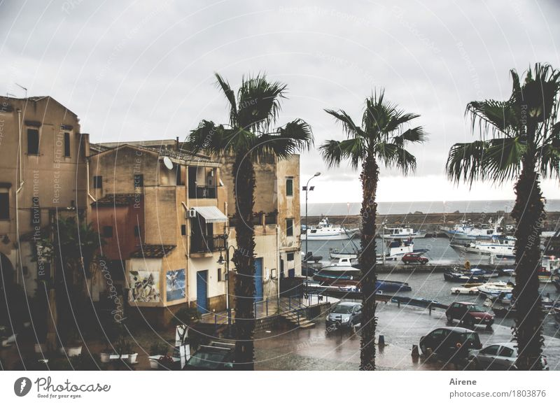 Vacation & Travel Water Clouds House (Residential Structure) Dark Cold Gray Brown Rain Weather Gloomy Places Wet Italy Harbour Palm tree