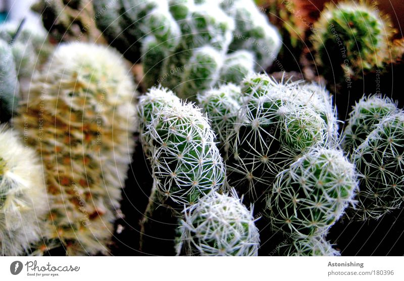 Nature Green Plant Brown Environment Growth Many Difference Cactus Thorn Thorny Foliage plant Pot plant Ornamental plant