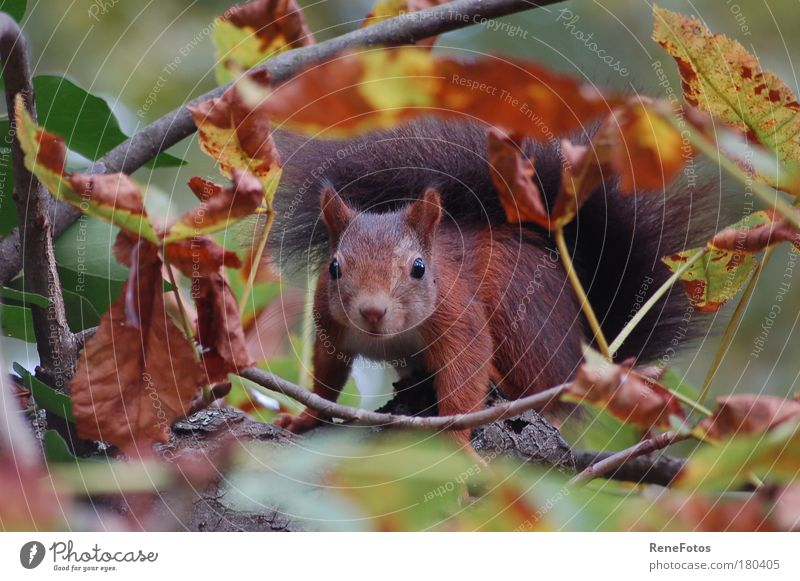 Beautiful Tree Animal Yellow Autumn Brown Wait Sit Observe Branch Curiosity Concentrate Wild animal Cute Watchfulness Autumn leaves
