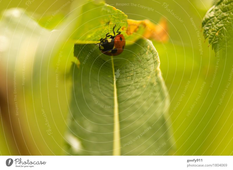 Cover Environment Nature Earth Air Beautiful weather Plant Bushes Leaf Foliage plant Wild plant Garden Park Meadow Animal Farm animal Wild animal Beetle